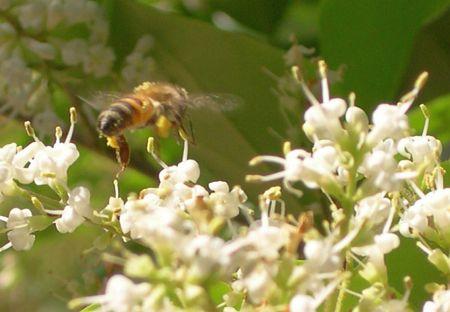 7 motive sa consumi polen de albine